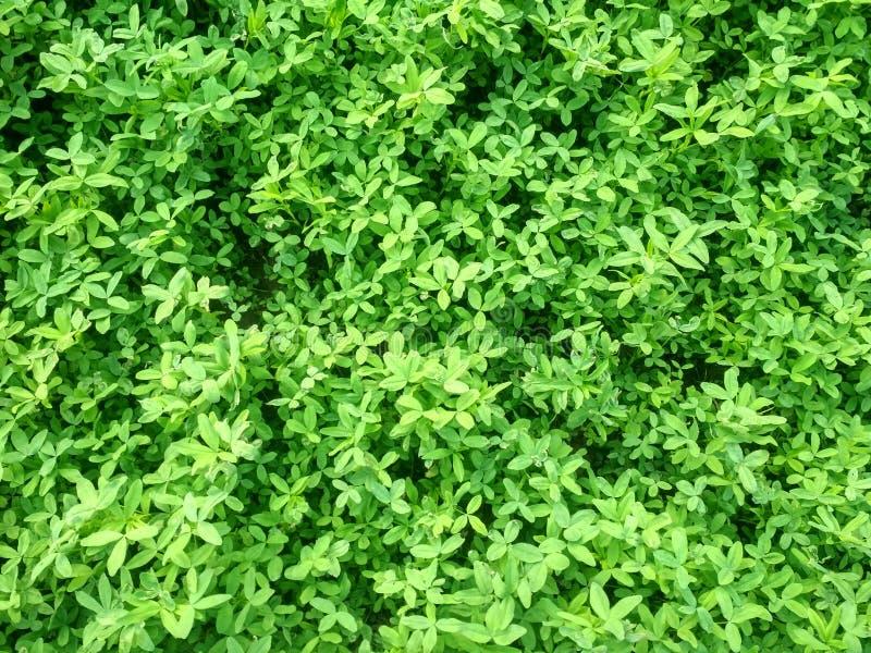 Обои природы зеленые стоковая фотография rf