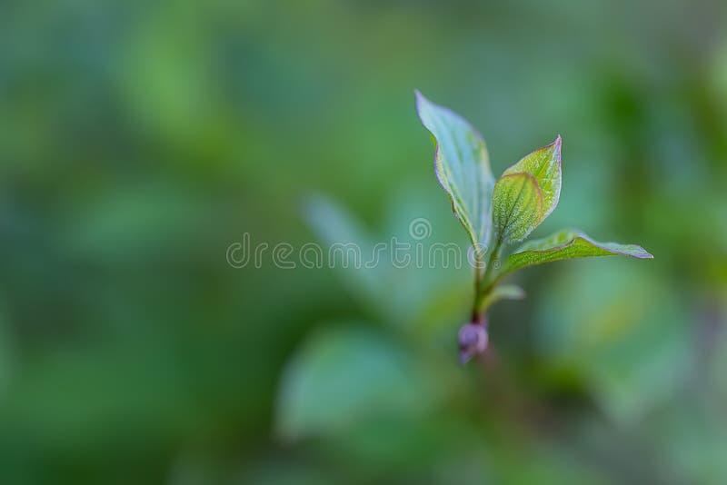 : Молодые листья в весеннем времени стоковые фотографии rf