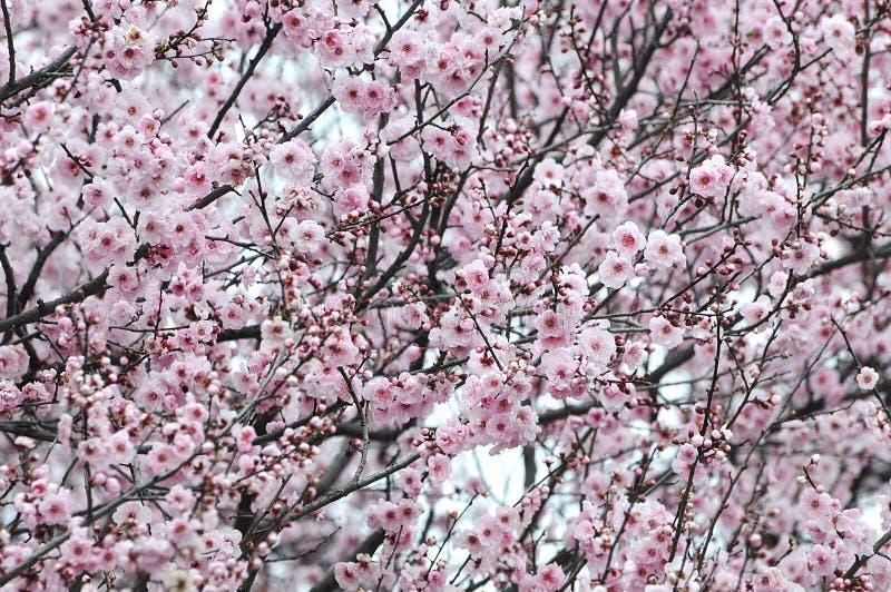 Обочина цветений в южной Австралии стоковые изображения