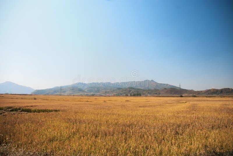 Обрабатываемая земля стоковое фото