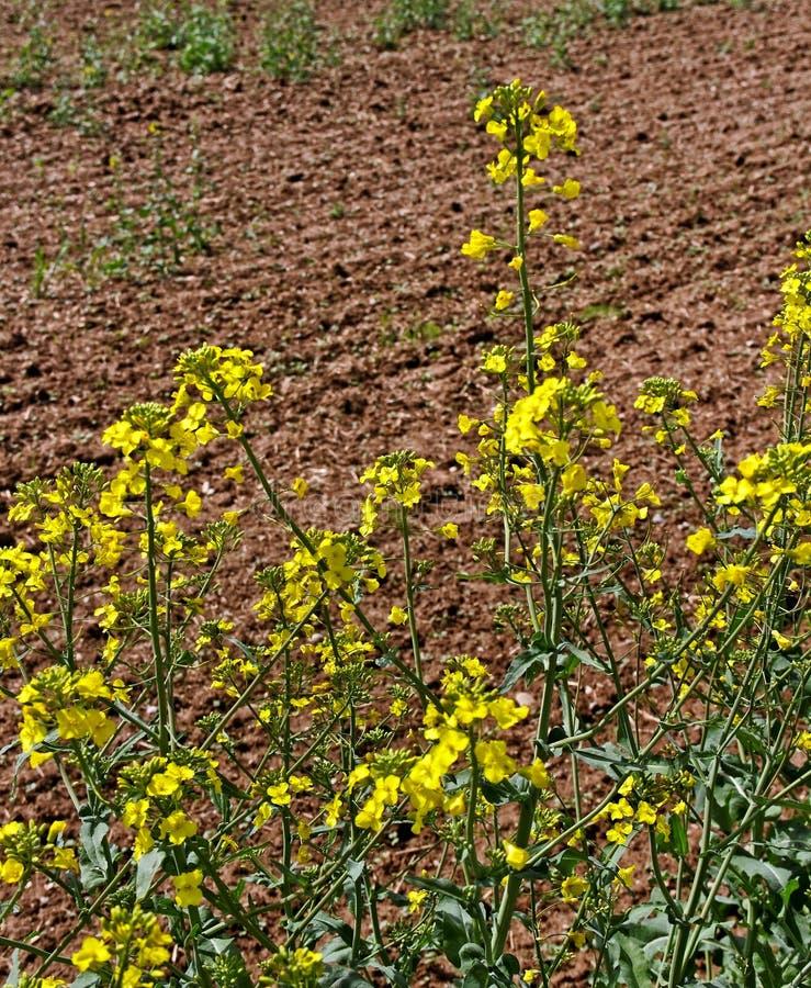 Download Обрабатываемые земли. стоковое изображение. изображение насчитывающей расти - 33739427