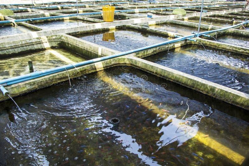 Обрабатывайте землю рыбы питомника орнаментальные пресноводные в рециркулировать систему аквакультуры стоковые изображения