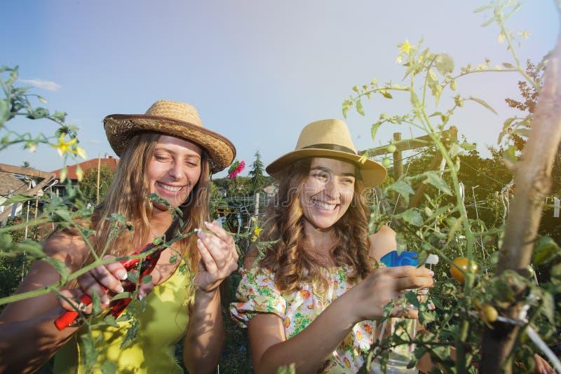 обрабатывать землю девушек стоковое изображение