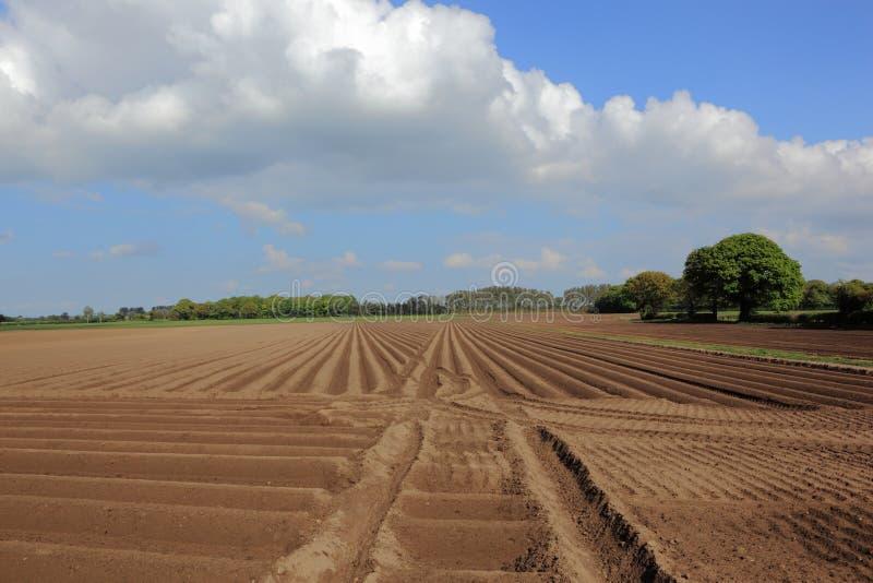 Обрабатывать землю ландшафт в весеннем времени с гребнями и взборозженными деревьями почвы плужка и красивых и облаками стоковое изображение