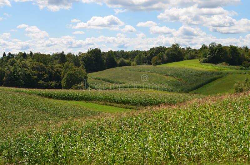Обрабатывать землю в Drasici стоковые фотографии rf
