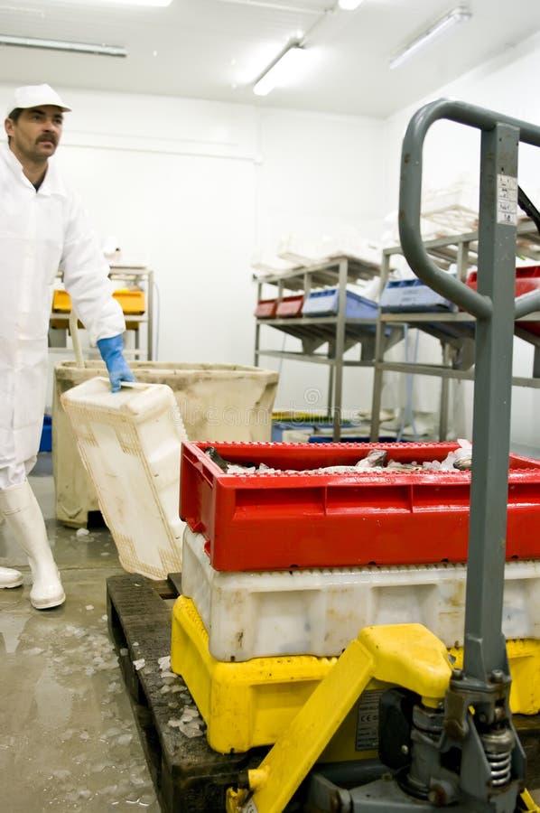 обрабатывать рыб фабрики стоковые изображения
