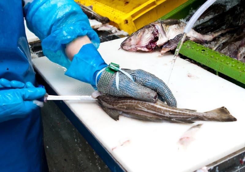 обрабатывать рыб фабрики стоковое фото