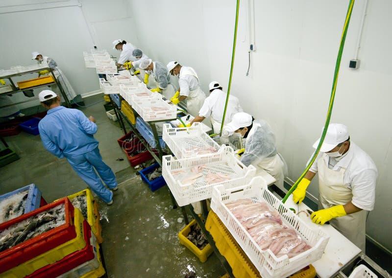 обрабатывать рыб стоковое фото rf