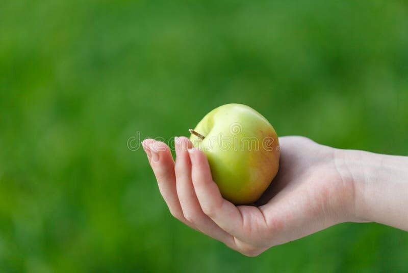 Обрабатывающ землю, садовничающ, жмущ и концепция людей - женщина вручает держать яблока стоковая фотография rf