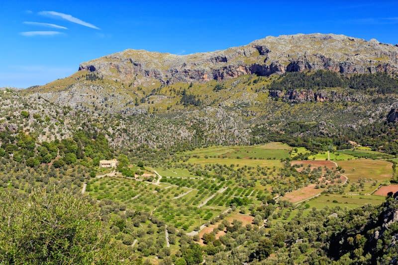 Обрабатывающ землю в Serra de Tramuntana, Мальорке стоковая фотография rf