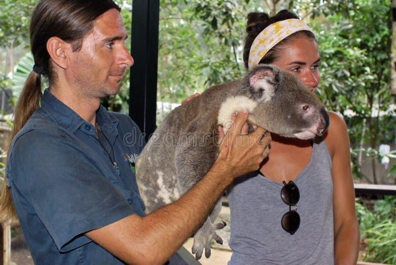 Обработчик держа коалу в Австралии стоковые фотографии rf