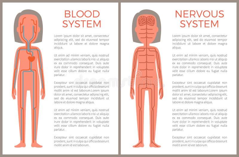 Образец крови и нервных систем строения тела иллюстрация штока