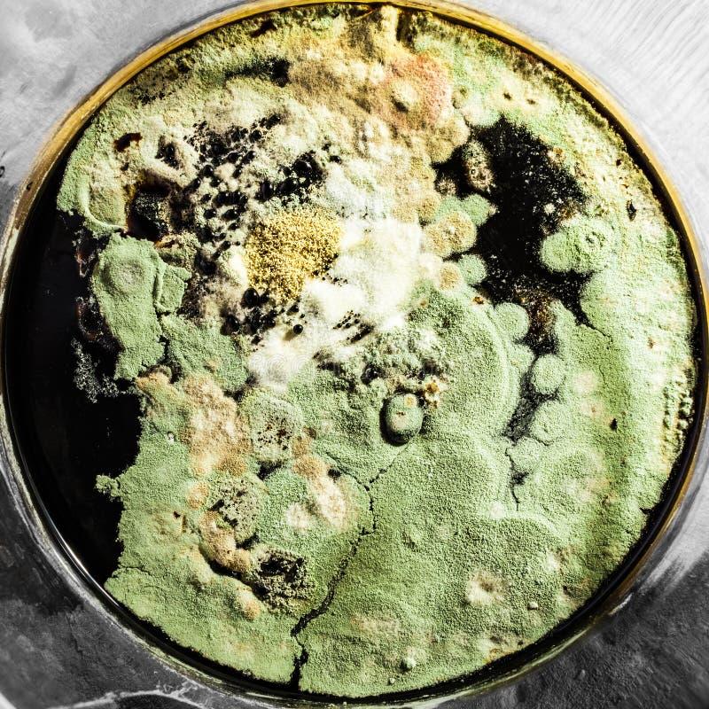 Образование в чашке Петри, абстрактная микробиологическая текстура зеленой прессформы стоковая фотография rf