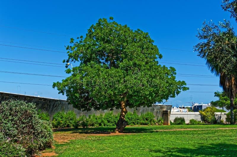 Обрамленное дерево к небу ` s дня с электрическими проводами на заднем плане стоковые фото