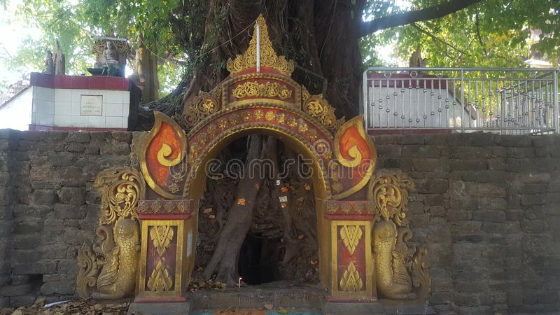 Обрамленное дерево укореняет вне виска в Мьянме стоковое фото rf