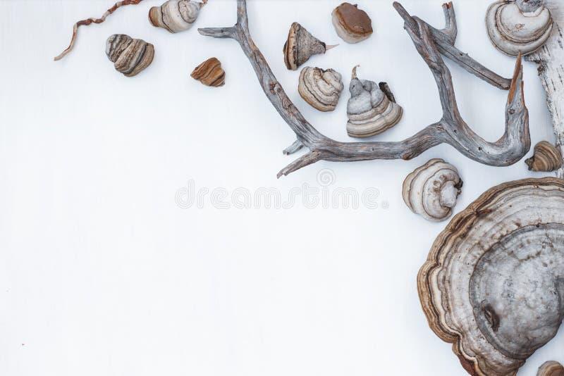 Обрамляя мотивы леса стоковое фото