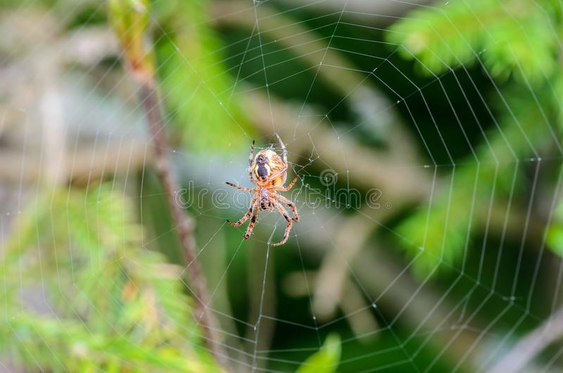 Обратная сторона паука стоковые фотографии rf