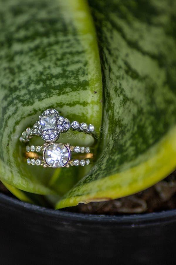 Обручальные кольца в завитых зеленых лист стоковое изображение rf
