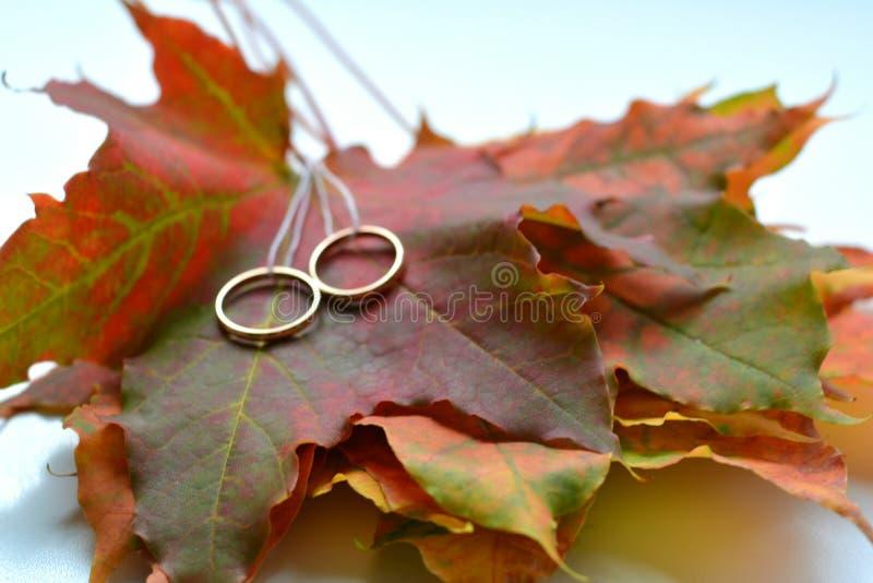 Обручальные кольца и листья осени стоковые фотографии rf