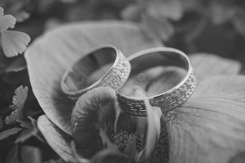 Обручальные кольца и орхидея стоковые изображения