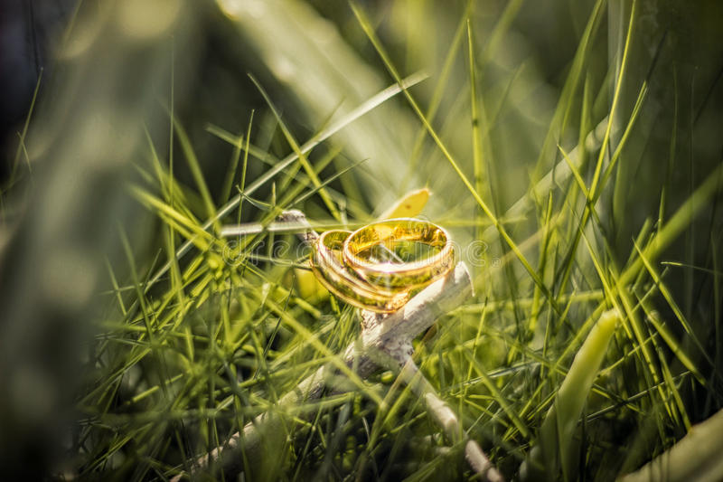 Обручальное кольцо на траве стоковое изображение