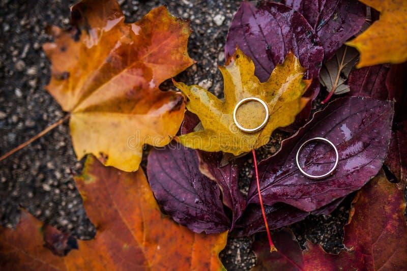 Обручальные кольца на листьях осени стоковые фото