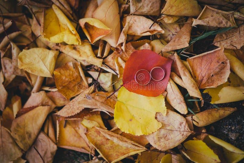 Обручальные кольца на красных и желтых листьях осени стоковое изображение rf