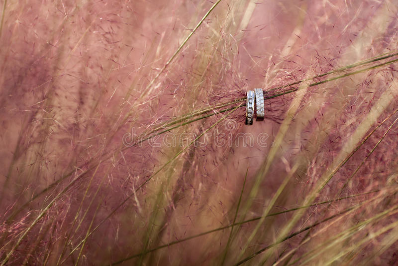 Обручальные кольца приостанавливанные на орнаментальной траве стоковая фотография