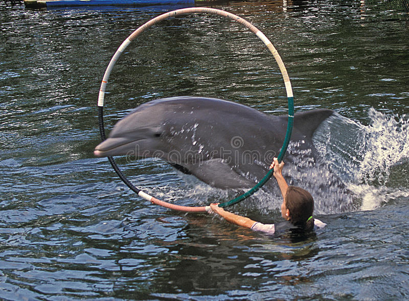 обруч дельфина скачет ключевой largo стоковые фотографии rf