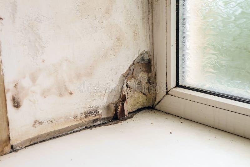 Обрызгивание и рост прессформ наклона окна около пластиковых окна и windowsill стоковые изображения rf