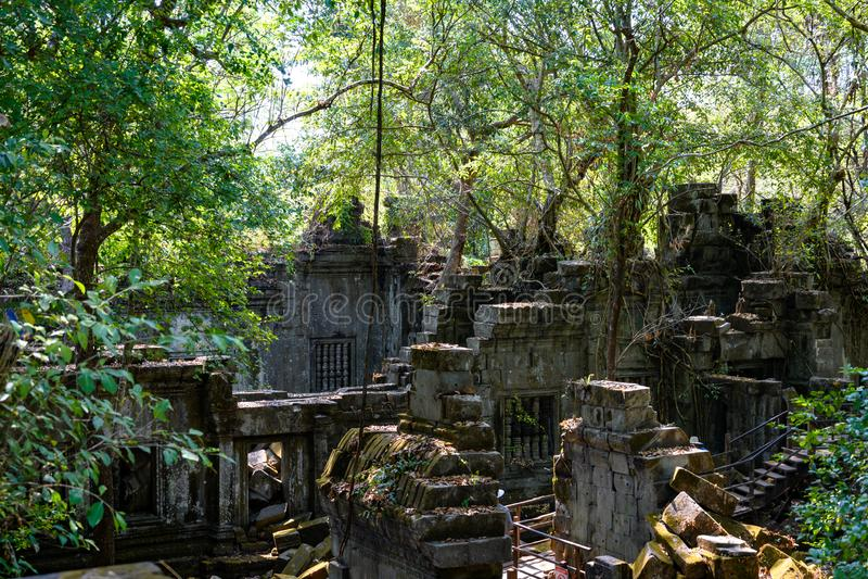 Обслуживание demage от растя деревьев на виске Beng Malea, Angkor, Siem Reap, Камбодже Большие корни над стенами и крышей виска стоковая фотография rf
