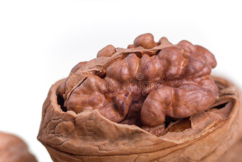 Обстреливаемые грецкие орехи на белой предпосылке изолировано высушенные гайки стоковые изображения rf