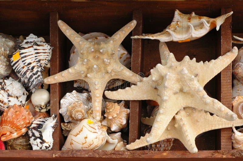 обстреливает starfish стоковая фотография