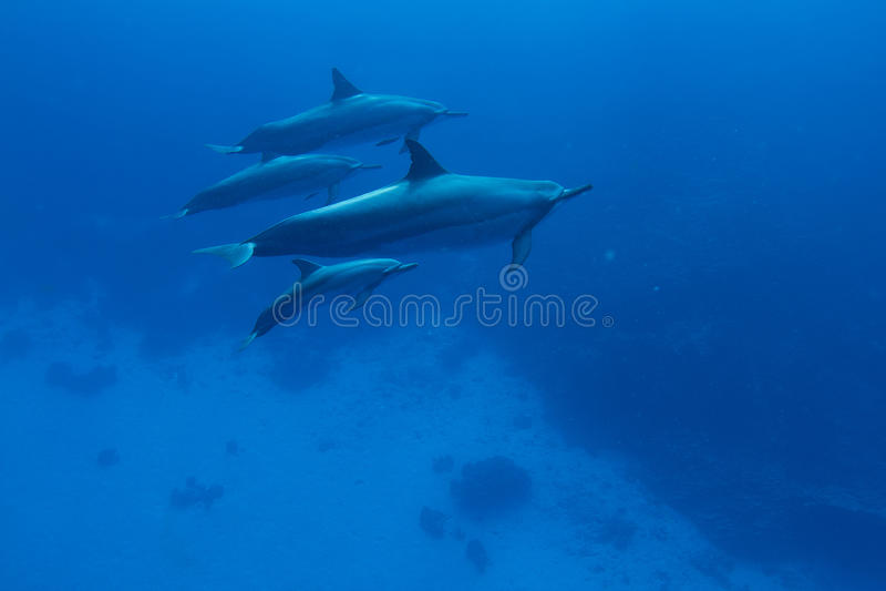 обтекатель втулки дельфина стоковое изображение