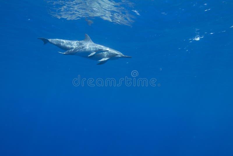обтекатель втулки дельфина стоковые фотографии rf