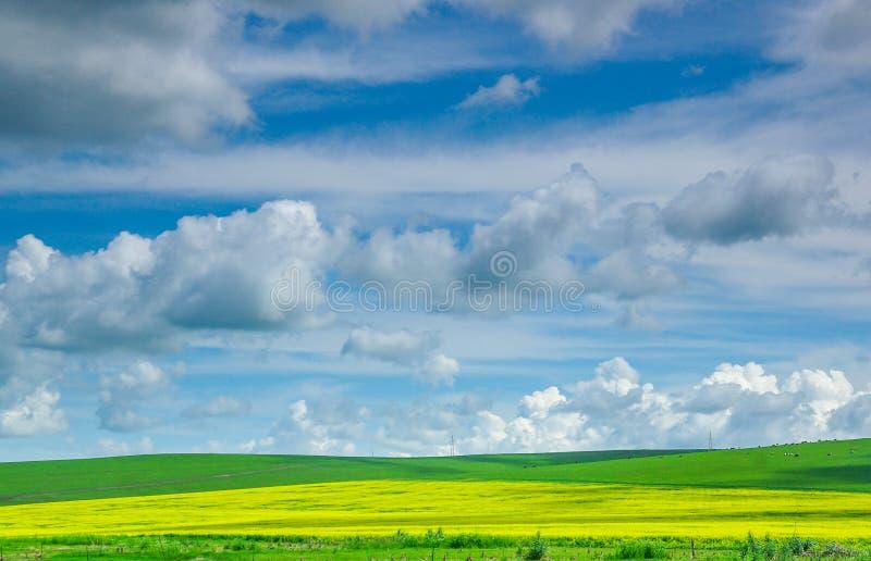 Обширная зеленая прерия стоковые изображения rf