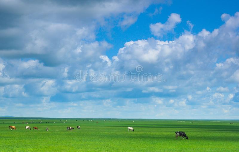 Обширная зеленая прерия стоковая фотография