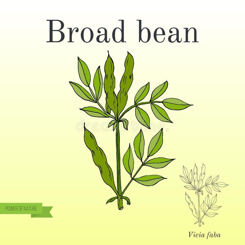Обширные фасоли или фасоли Fava Серия овощей и ингридиентов для варить бесплатная иллюстрация