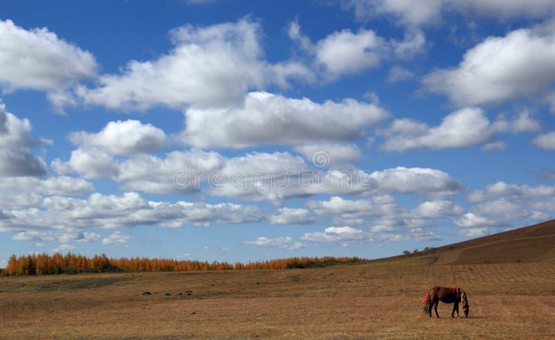 Обширный пейзаж злаковика стоковое фото