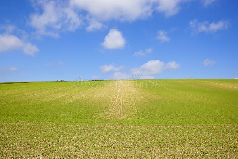 Обширный урожай гороха стоковое фото