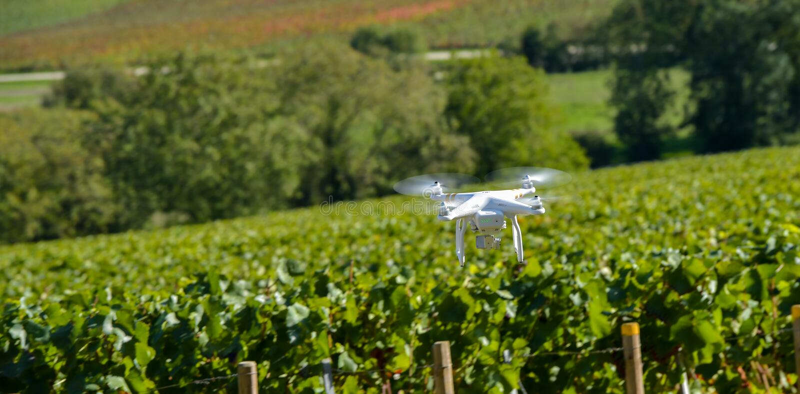 Общего назначения трутень над wineyard стоковые изображения rf