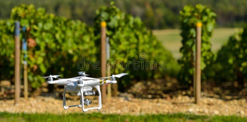 Общего назначения трутень над wineyard стоковое изображение rf