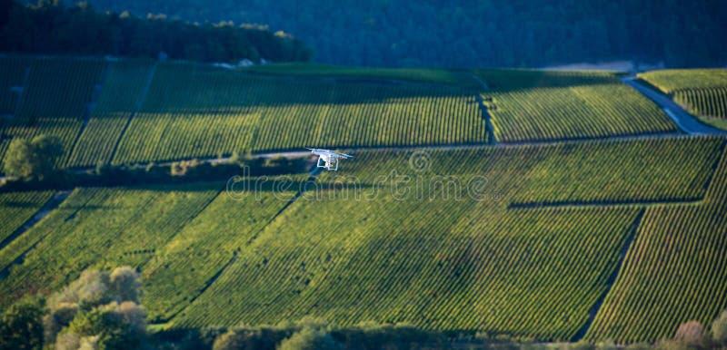 Общего назначения трутень над wineyard стоковая фотография rf