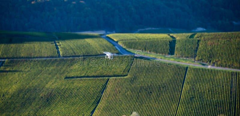 Общего назначения трутень над wineyard стоковое изображение