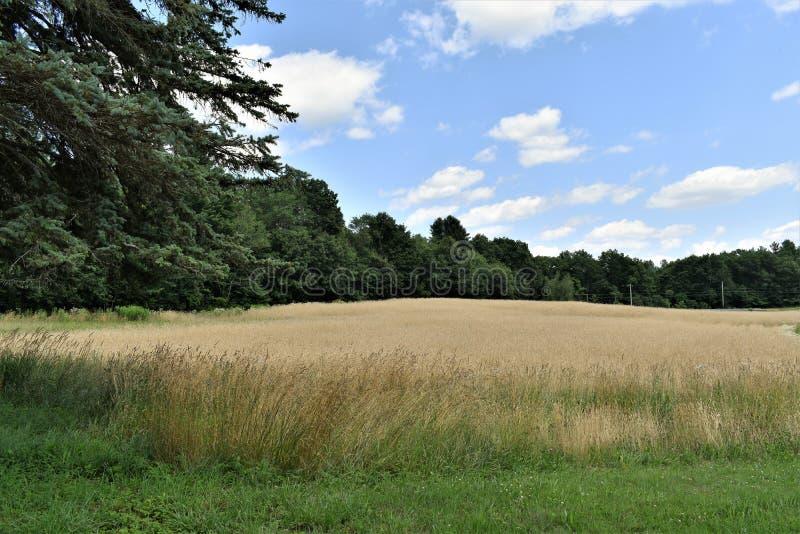 Общее поле летом, городок Groton, Middlesex County, Массачусетса, Соединенных Штатов стоковые фотографии rf