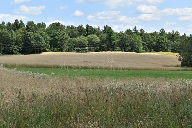 Общее поле летом, городок Groton, Middlesex County, Массачусетса, Соединенных Штатов стоковые изображения