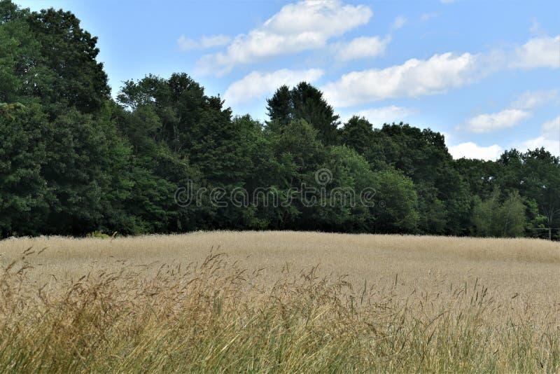 Общее поле летом, городок Groton, Middlesex County, Массачусетса, Соединенных Штатов стоковое изображение rf
