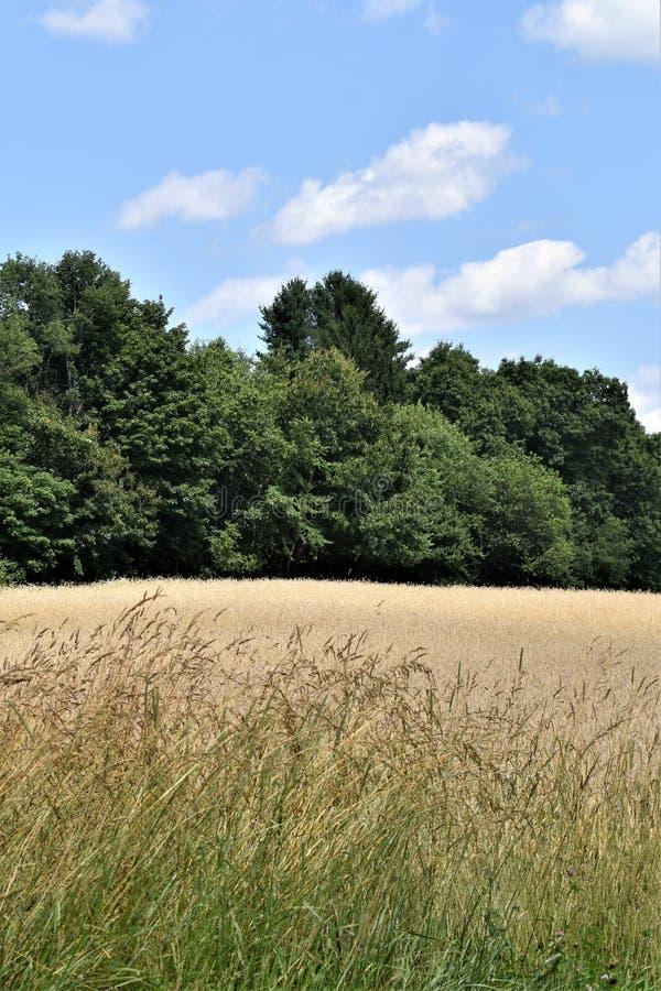 Общее поле летом, городок Groton, Middlesex County, Массачусетса, Соединенных Штатов стоковое фото rf