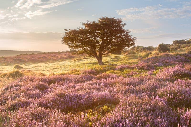 Общее Porlock, exmoor Сомерсет Великобритания стоковое изображение rf