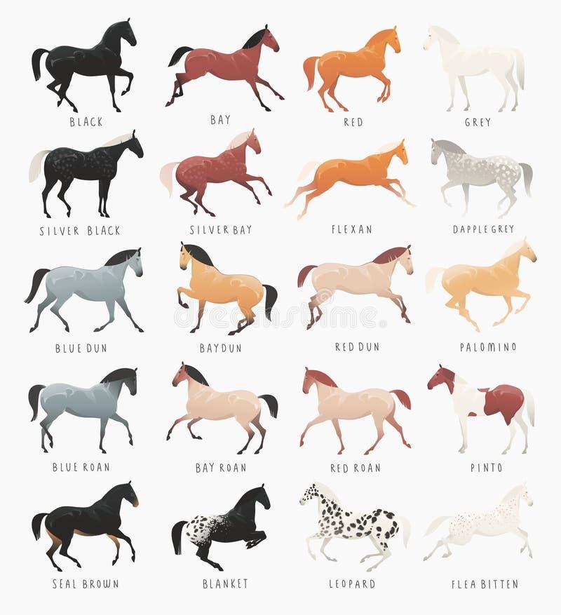 Общие цвета пальто лошади иллюстрация штока